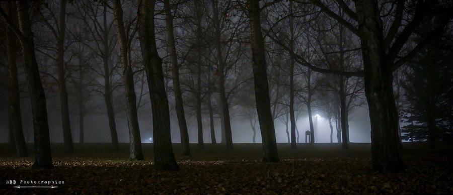 critiques-fog-ruth-bergen-braun-900px